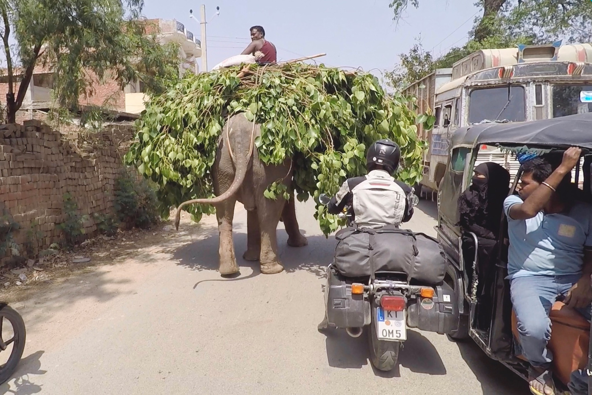 Motorcycle riding past an elephant